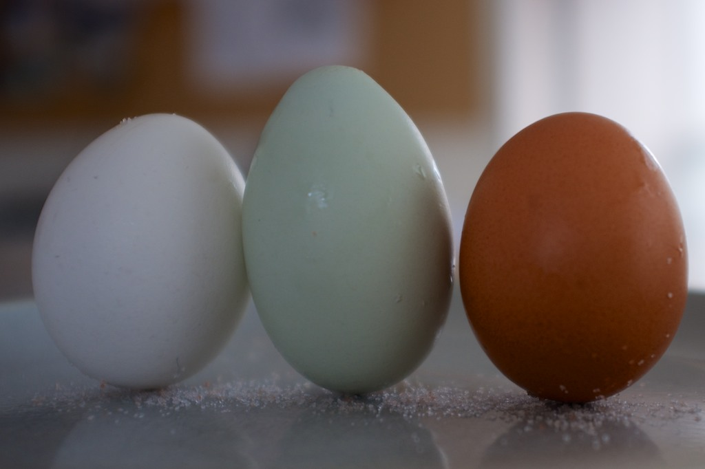 Eggs come in all different shape, sizes, and colours.